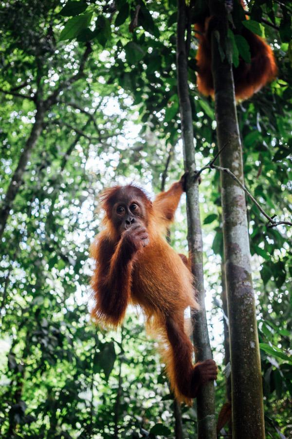 Madelene-Farin-Indonesia-0941.jpg