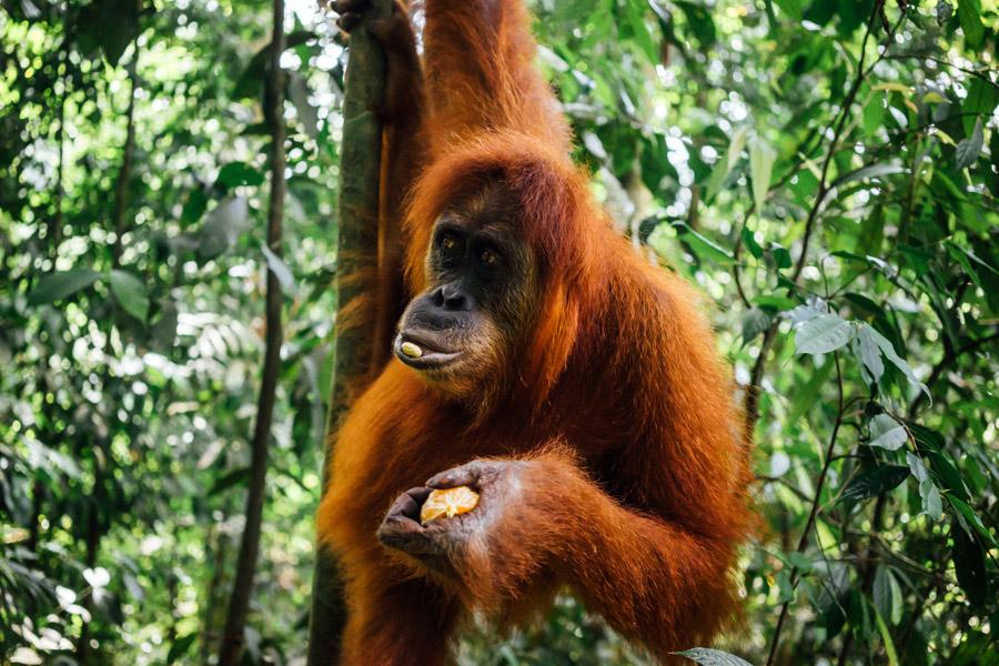 Madelene-Farin-Indonesia-0948.jpg