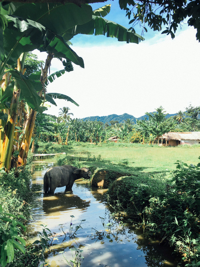 Madelene-Farin-Indonesia-0964.jpg