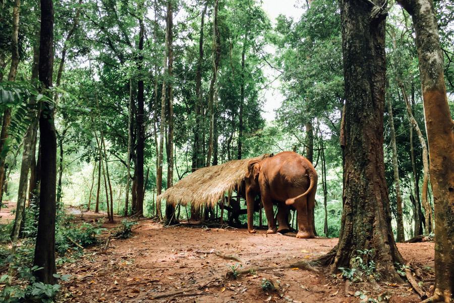 Madelene-Farin-Cambodia-1034.jpg