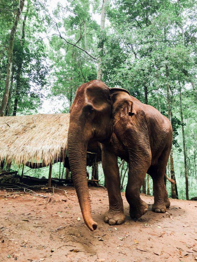 Madelene-Farin-Cambodia-1036.jpg