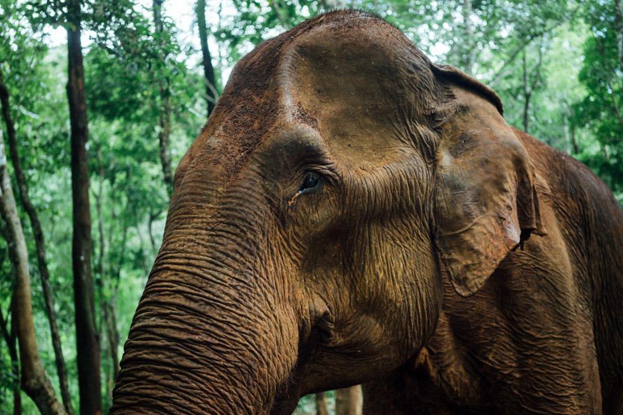 Madelene-Farin-Cambodia-1047.jpg
