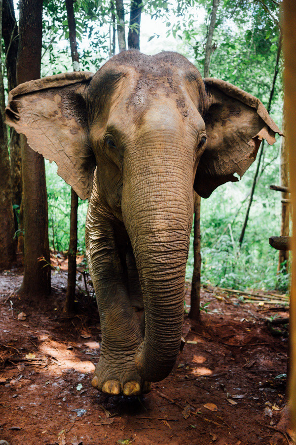 Madelene-Farin-Cambodia-1063.jpg