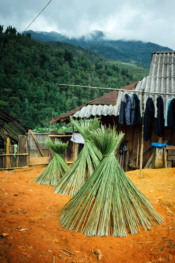 The beginnings of a beautiful garment: stalks of hemp drying before the fibers are stripped, spun, woven, washed, then dip-dyed in the darkest shades of indigo (which you can see drying on the bamboo rod behind).