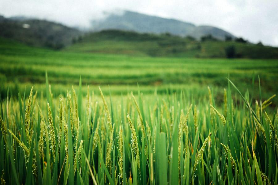 Madelene-Farin-Vietnam-0876.jpg