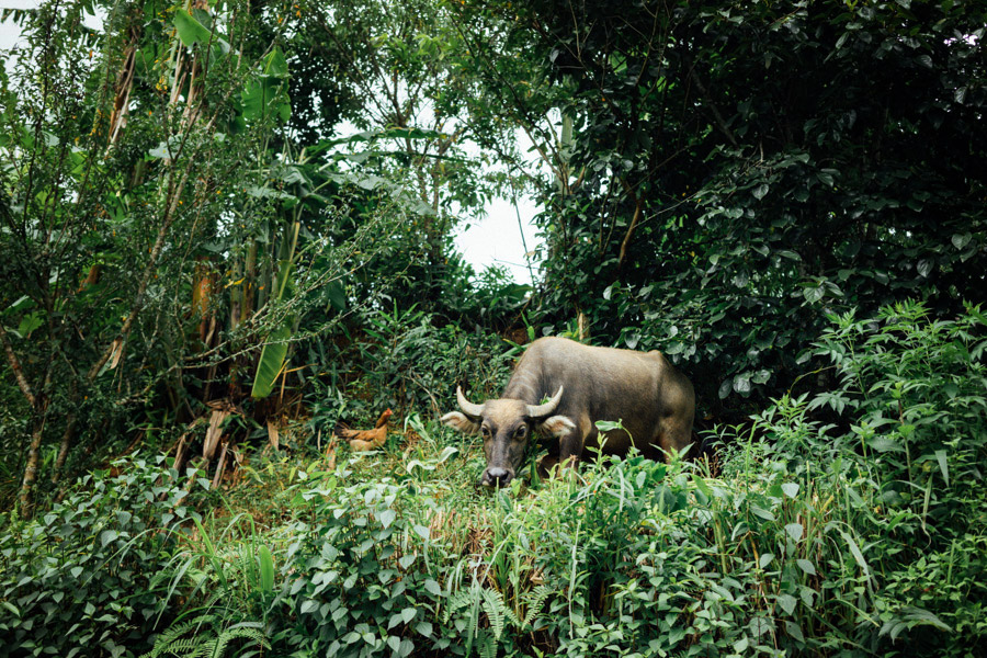 Madelene-Farin-Vietnam-0892.jpg