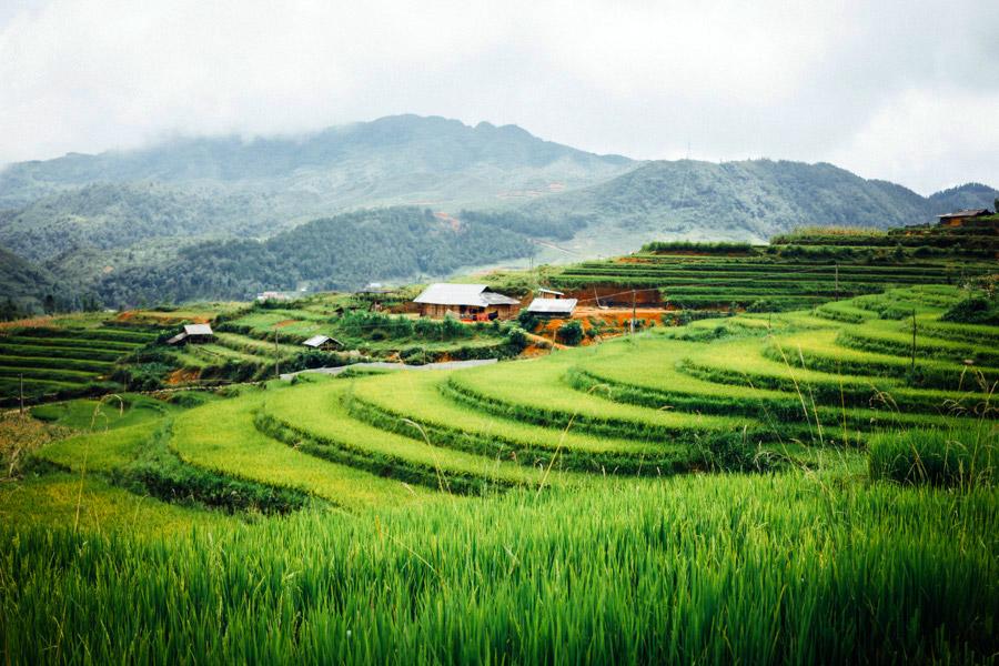 Madelene-Farin-Vietnam-0909.jpg