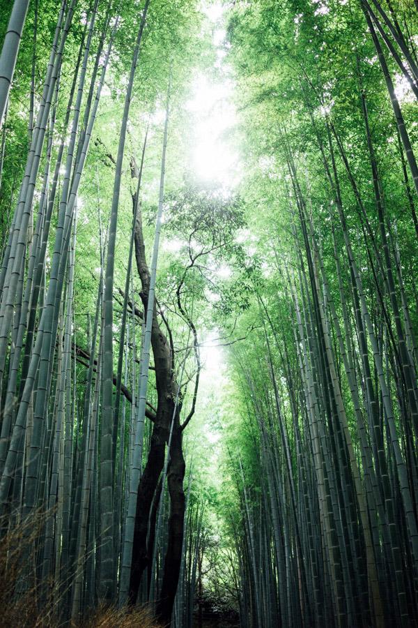 Madelene-Farin-Japan-0213.jpg