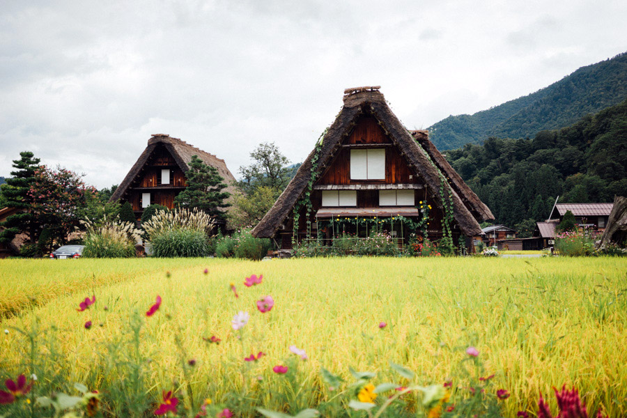 We couldn't imagine seeing these beautiful gasshō houses any other way - set in bucolic fields of green; but Shirakawa-go is actually one of the snowiest places in Japan, the reason for thick straw roofs, and its popularity during wintertime.