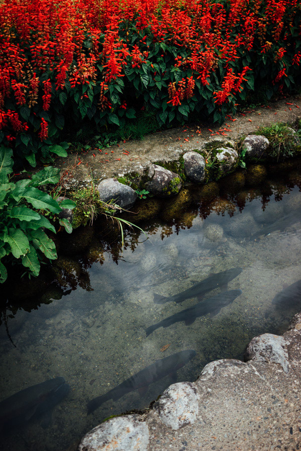 Madelene-Farin-Japan-0496.jpg