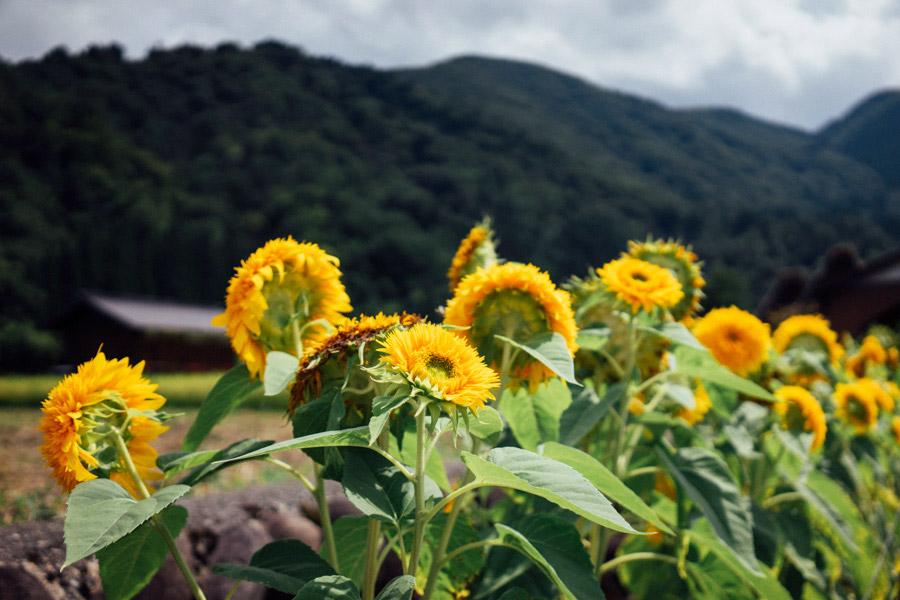 Madelene-Farin-Japan-0521.jpg