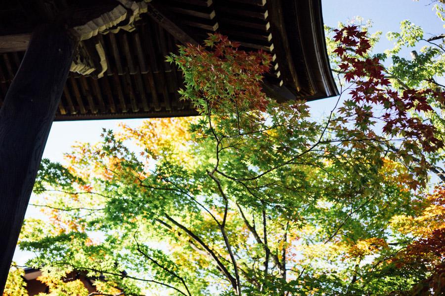 Madelene-Farin-Japan-0555.jpg