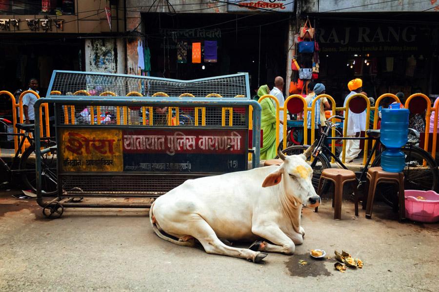 Madelene-Farin-India-0123.jpg