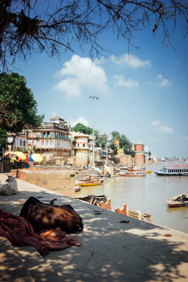 Madelene-Farin-India-0216.jpg