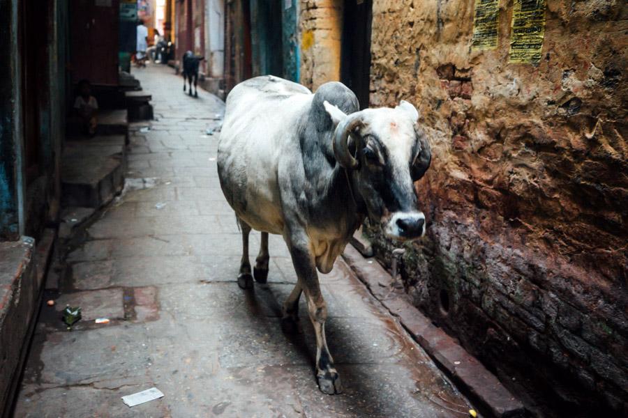 Madelene-Farin-India-0310.jpg
