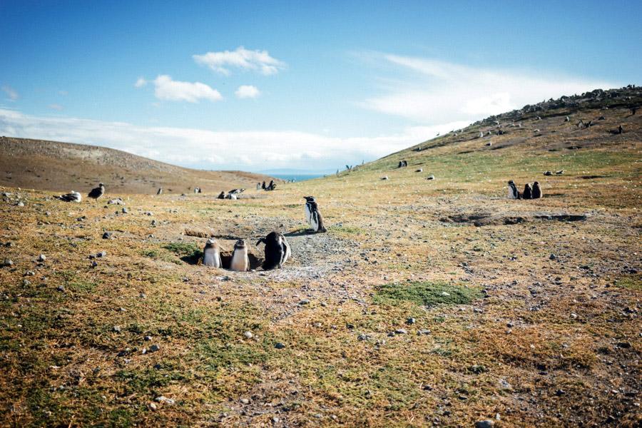 Madelene-Farin-Chile-0785.jpg