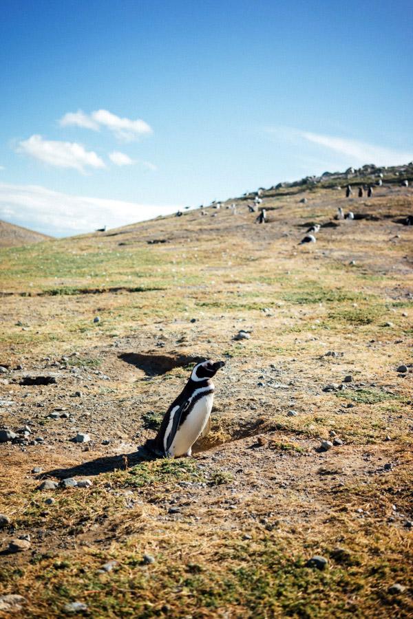 Madelene-Farin-Chile-0786.jpg