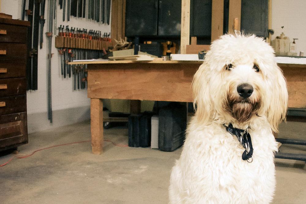 CHEWBACCA  Shop Dog