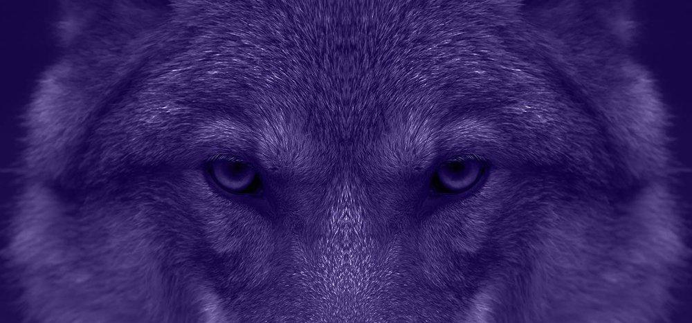 Animal Spirit Readings | Vanessa Tarot | Tarot & Spirit Animal Readings | Missoula, Montana