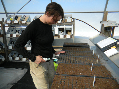 Allison, our seed master, seeding the first trays