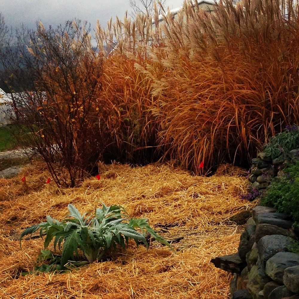 Display garden_late fall.jpg