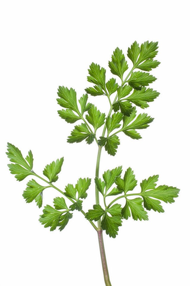 flat parsley.jpg