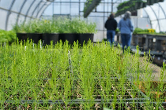 Open House 2014 asparagus.jpg