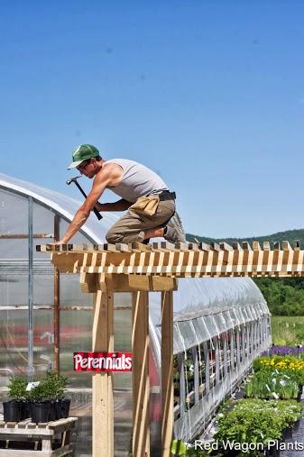 Eric building our pergola