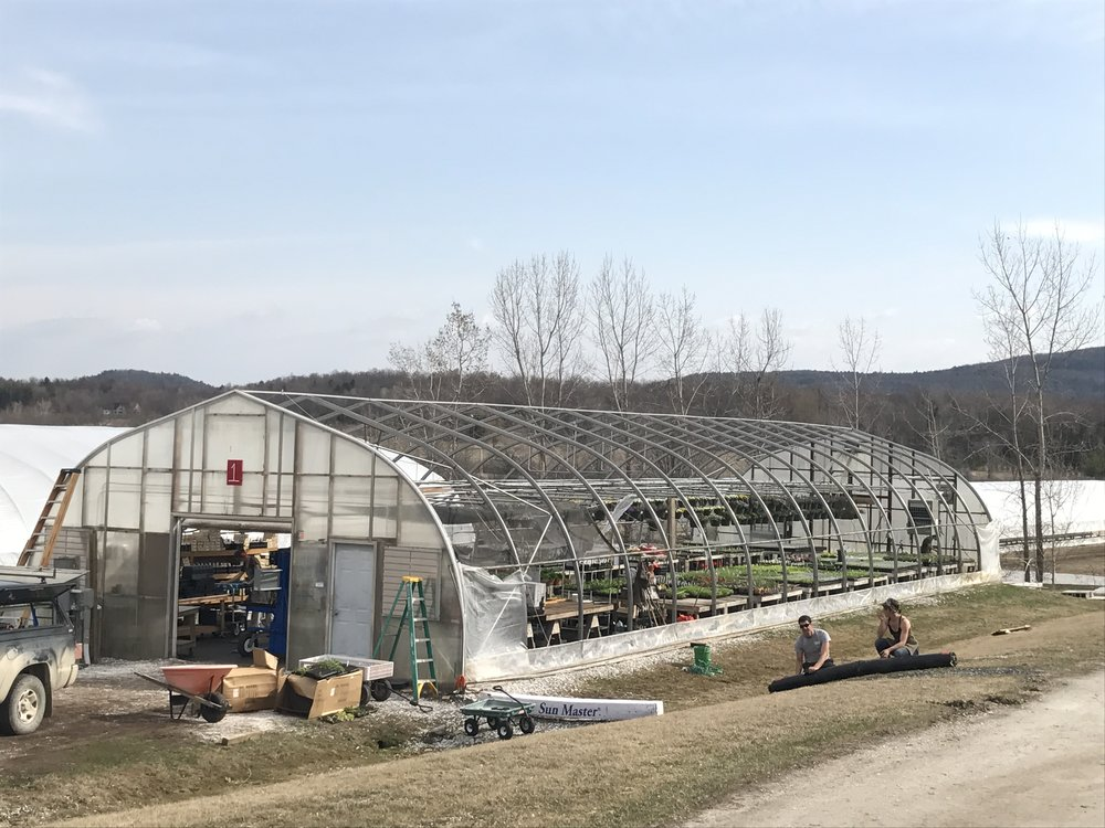 We changed the greenhouse plastic, while getting ready to open for the season and while getting our delivery routes organized for the year. And the wind picked up. But Team Red Wagon pulled it off with panache and grace.