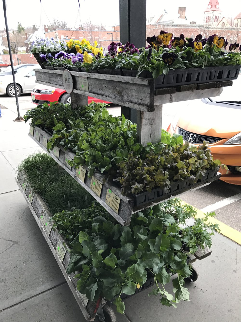 City Market / Onion River Coop got their first rack of plants as well.
