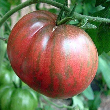 Pink-Berkely-Tie-Dye-Wild-Boar-Series-Tomato-Seeds.jpg