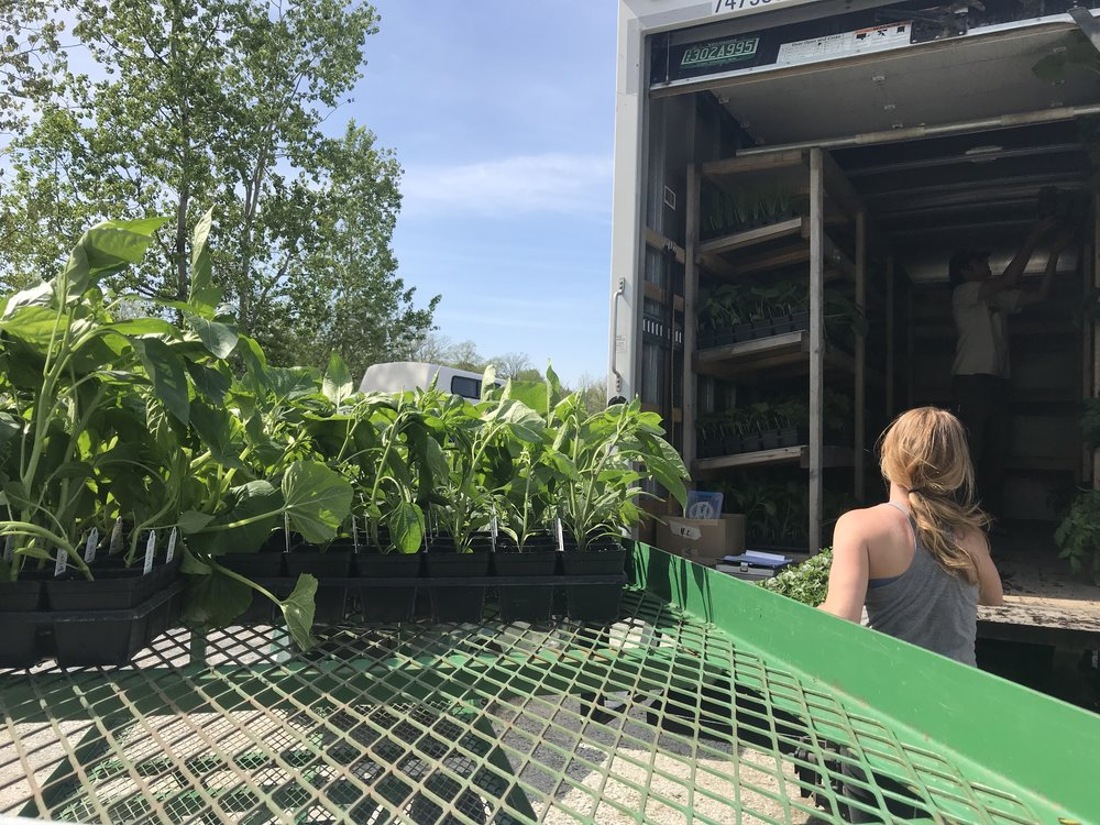 Kathryn loading the truck, hustling and slinging plants is what we do in May.