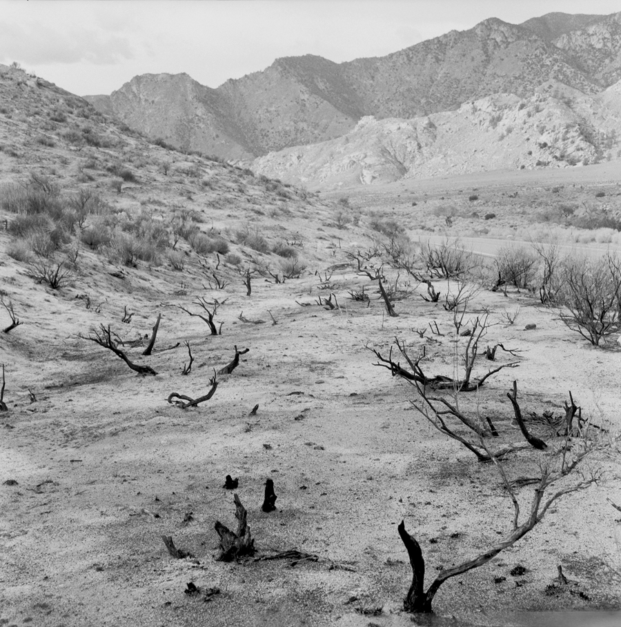 Burnt Bush   California Desert, 2004.