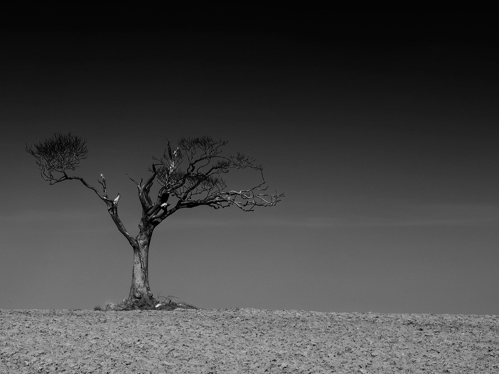 Fine Art Tree Photography by Geoff McGrath, Helens Bay, Co.Down, Northern Ireland