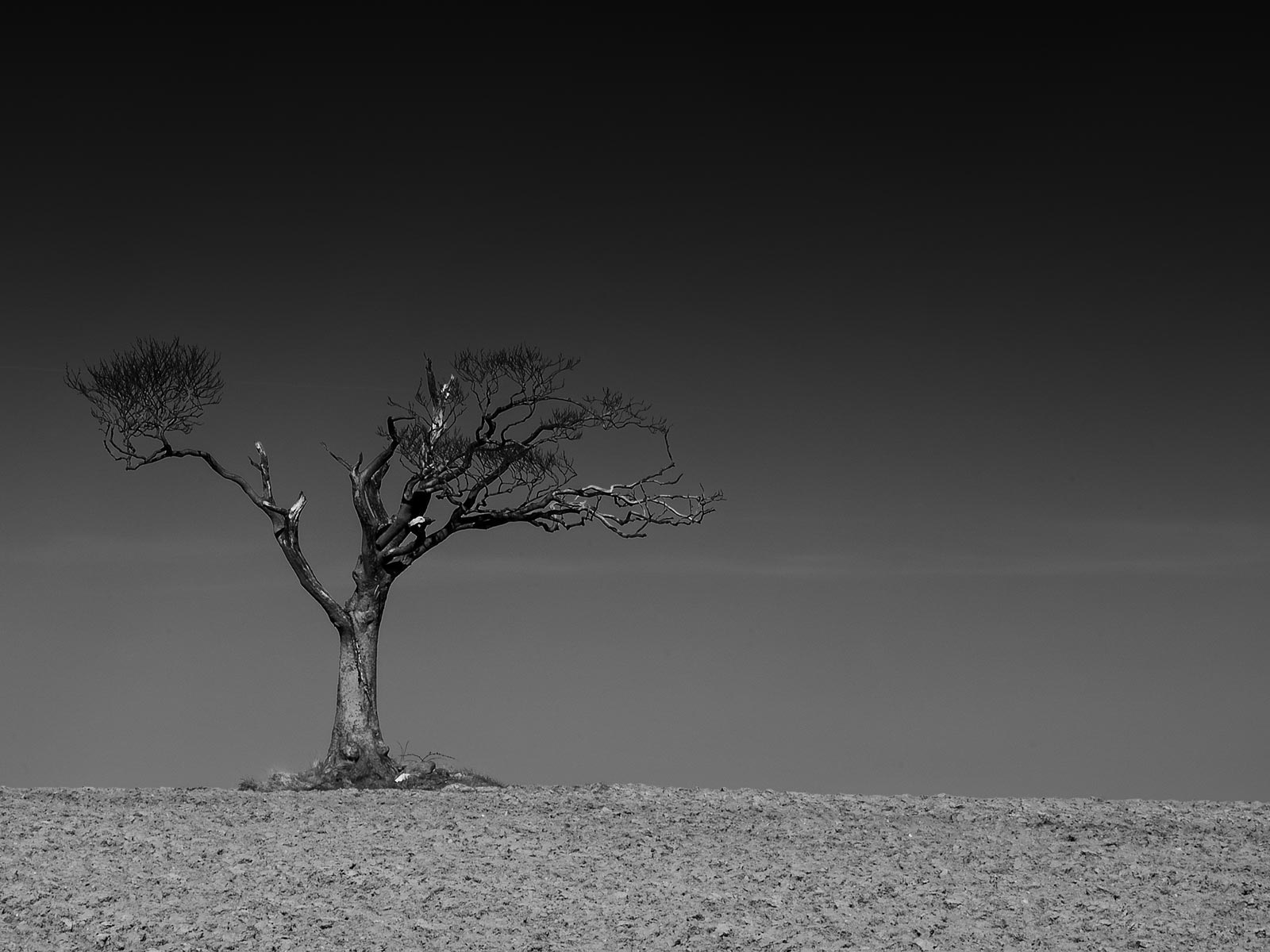 Tree taken at Ballyrobert, County Down by Geoff McGrath, Fine Art & Landscape Photographer, Northern Ireland