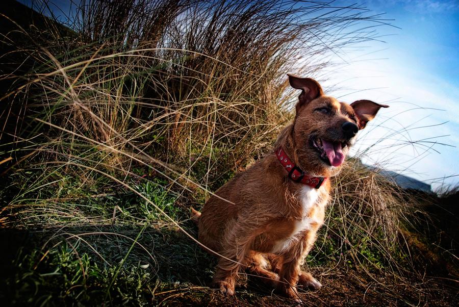 Alfie by Geoff McGrath - Pet Portrait - 03