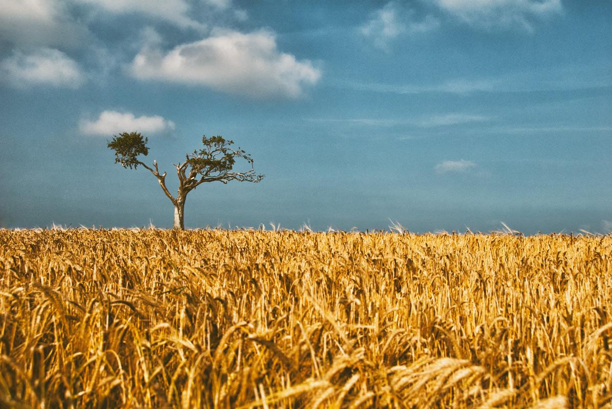 Rihannas Tree - Colour Cast - Geoff McGrath Photography - Fine Art Tree Photography