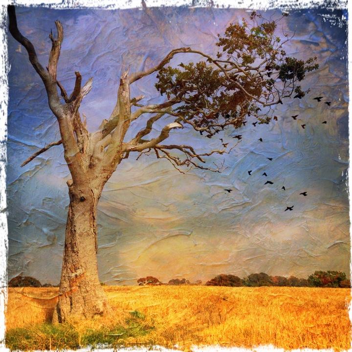 Rhiannas Tree - iPhoneography - Fine Art Tree Photography
