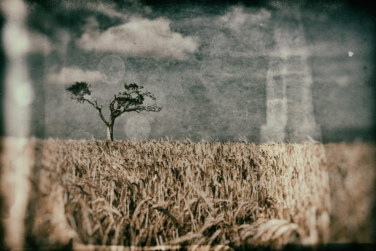 Rhiannas Tree - Fine Art - Wet Plate - Fine Art Tree Photography