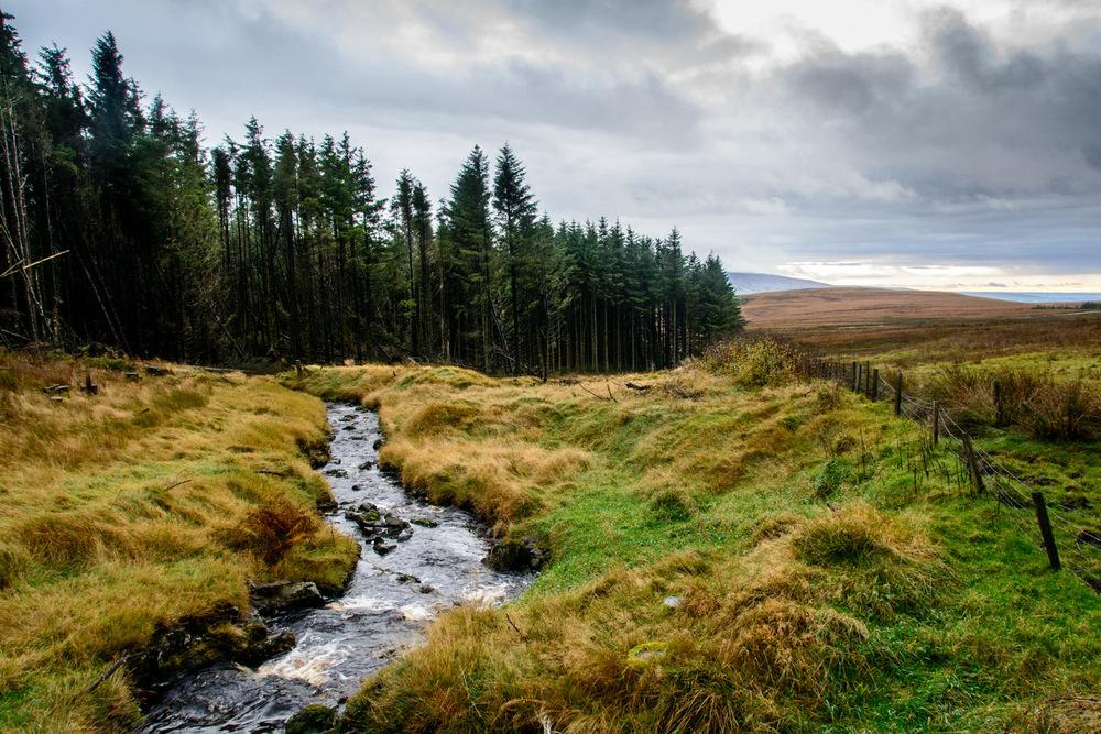 Irish Landscape - Newtowncrumlin 3 - Geoff McGrath