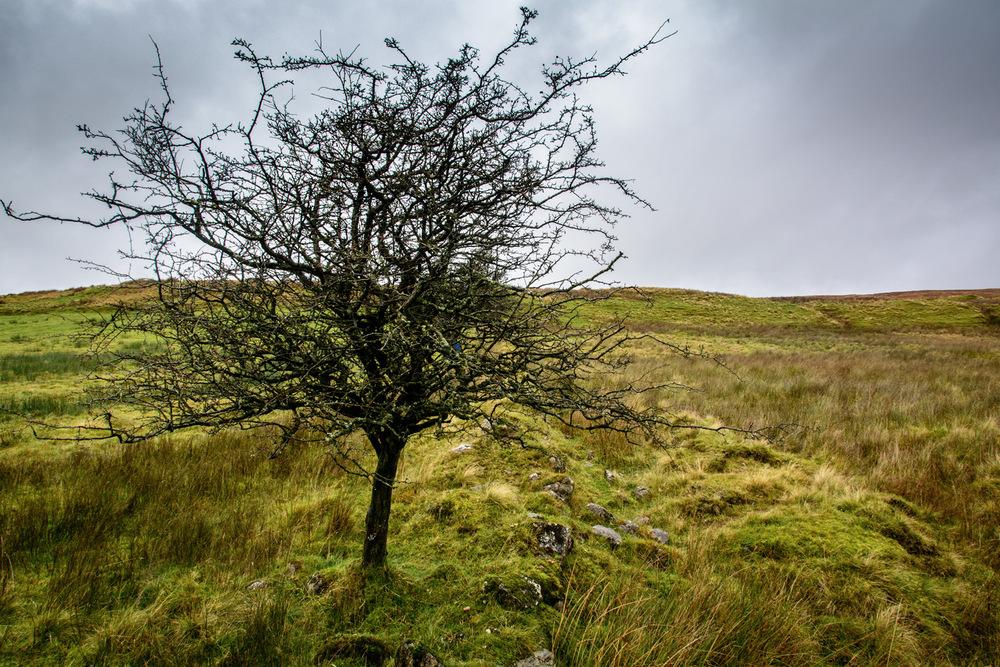Irish Landscape - Newtowncrumlin - Geoff McGrath
