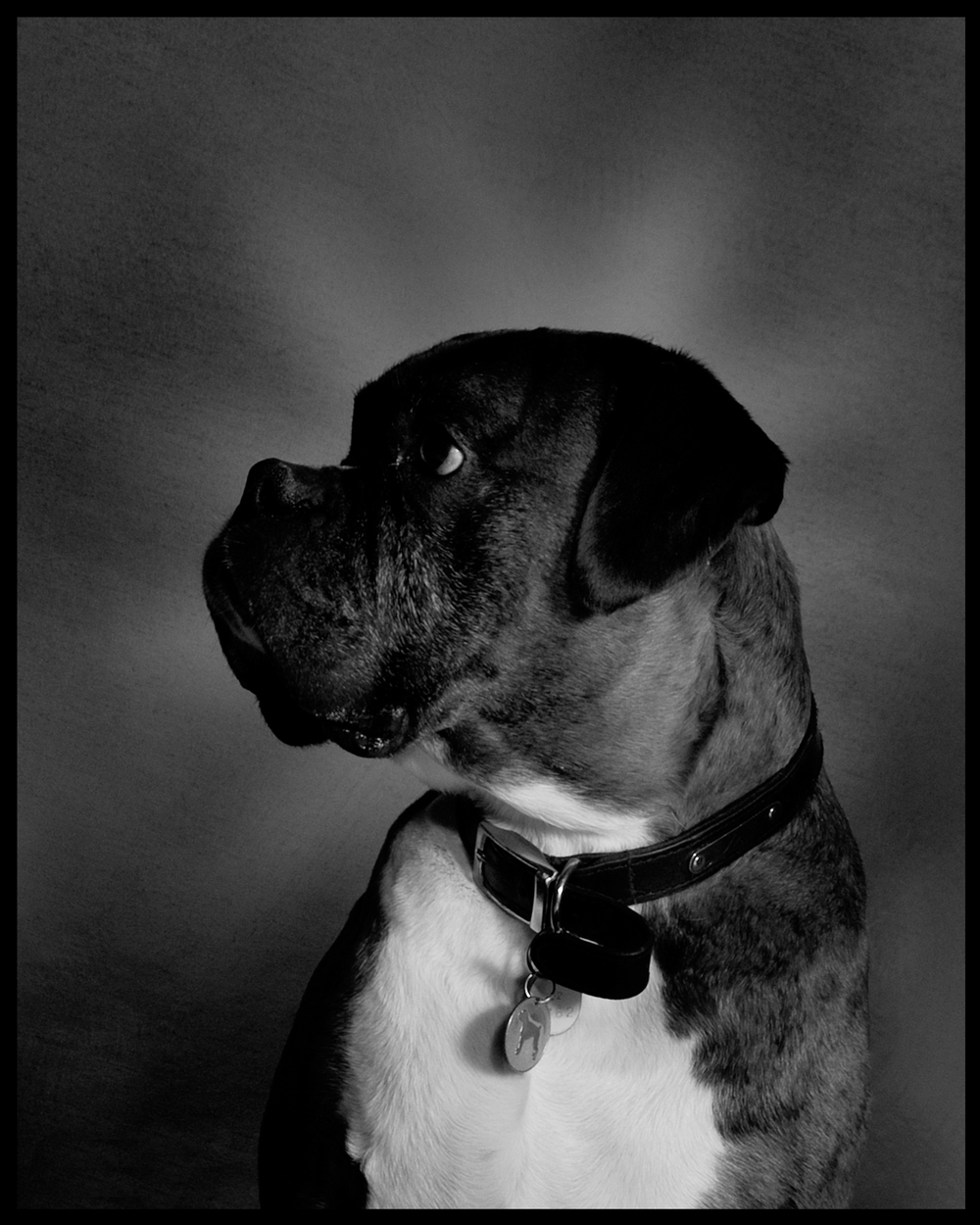 2010 - Silver Award - Pet Portraiture SWPP