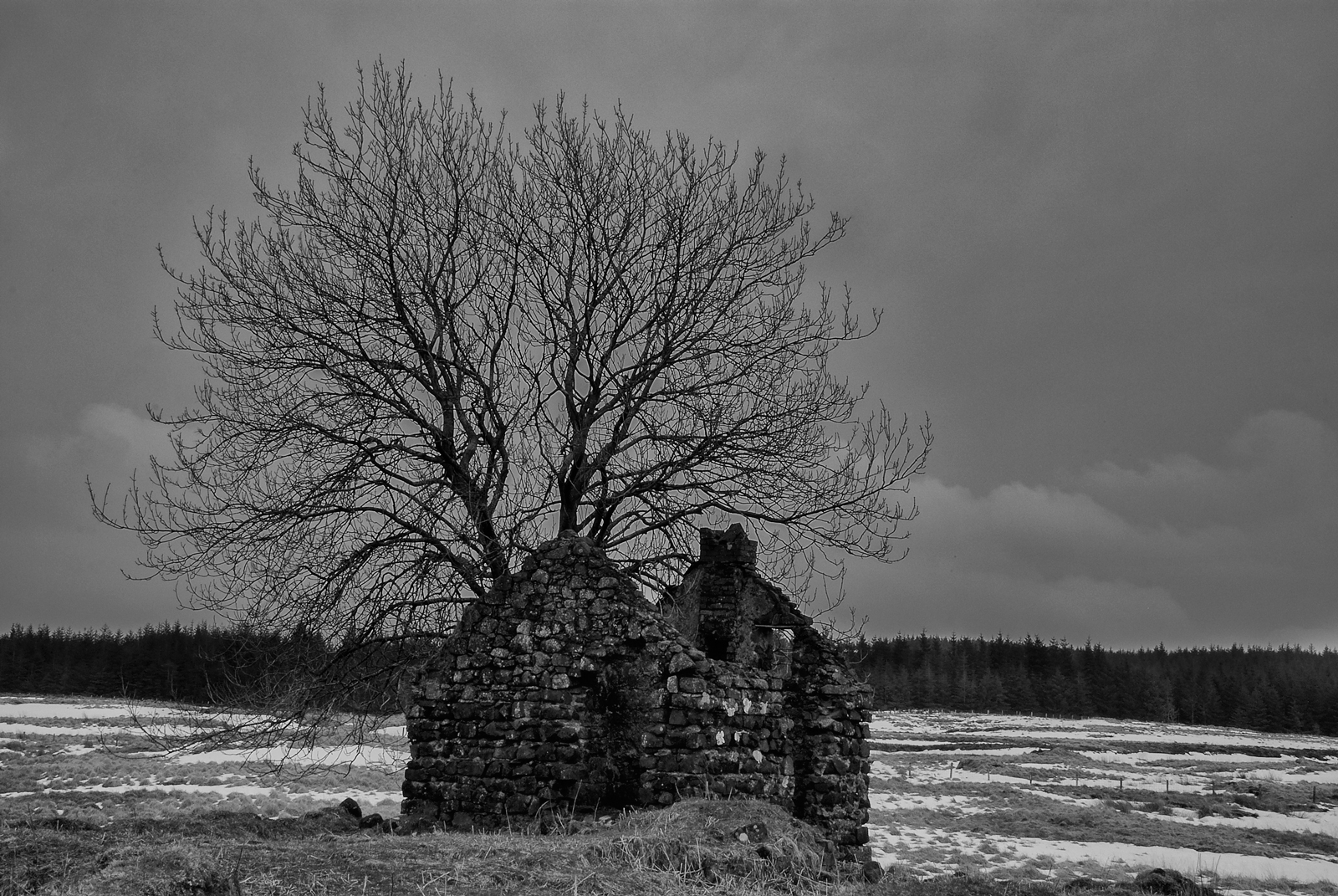 Desolate Cottage