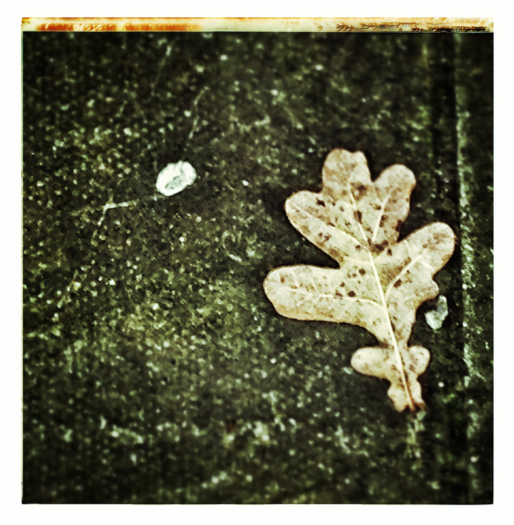 geoff+mcgrath+iphone+iphoneography+LEAF+on+pavement+northern+ireland[1][1].jpg