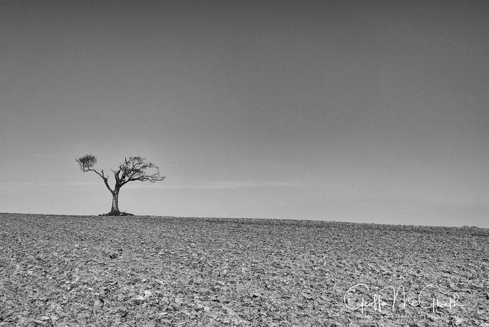 rihanna tree 01 - geoff mcgrath photography - irish landscape