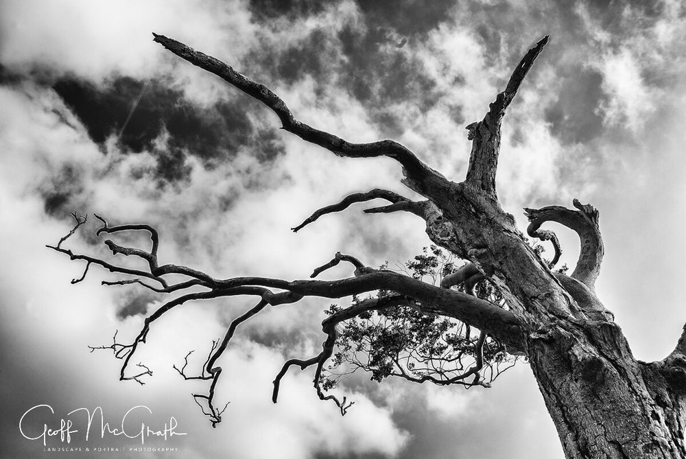 rihanna tree - 03 - geoff mcgrath photography - irish landscape