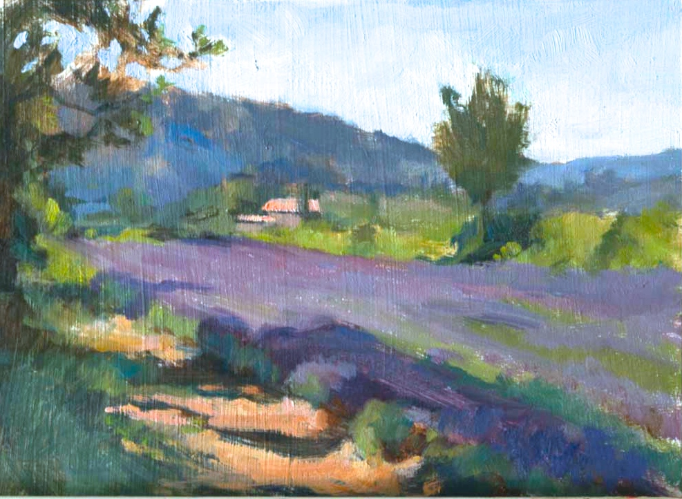 Lavender Field on a Summer Morning