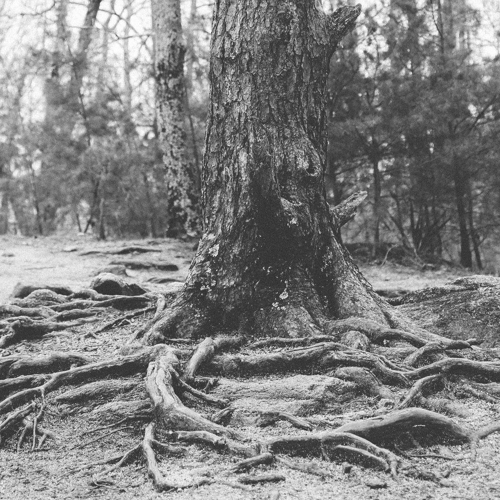 Roots+Creative+Co.jpeg