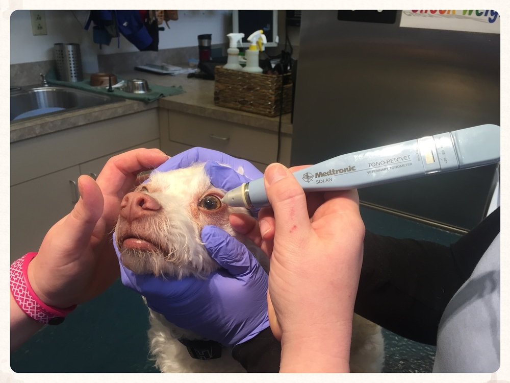 Testing glaucoma.