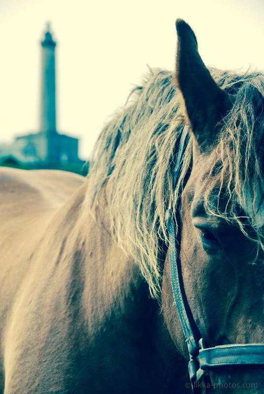 Horses - Cheval - Bretagne